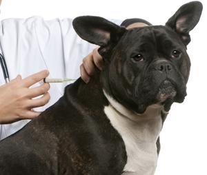 Vacinas pets em Americana