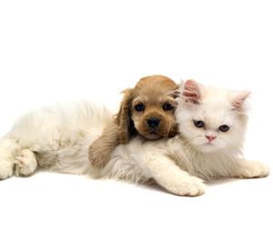 Clínica veterinária em Americana